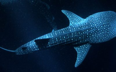 Immergetevi in una gabbia antisqualo con Shark Academy: un'esperienza virtuale nella magia del 6d riservata ai visitatori di EUDI SHOW 2018