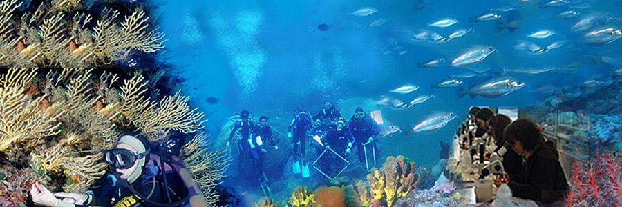 Percorsi formativi per operatore scientifico subacqueo